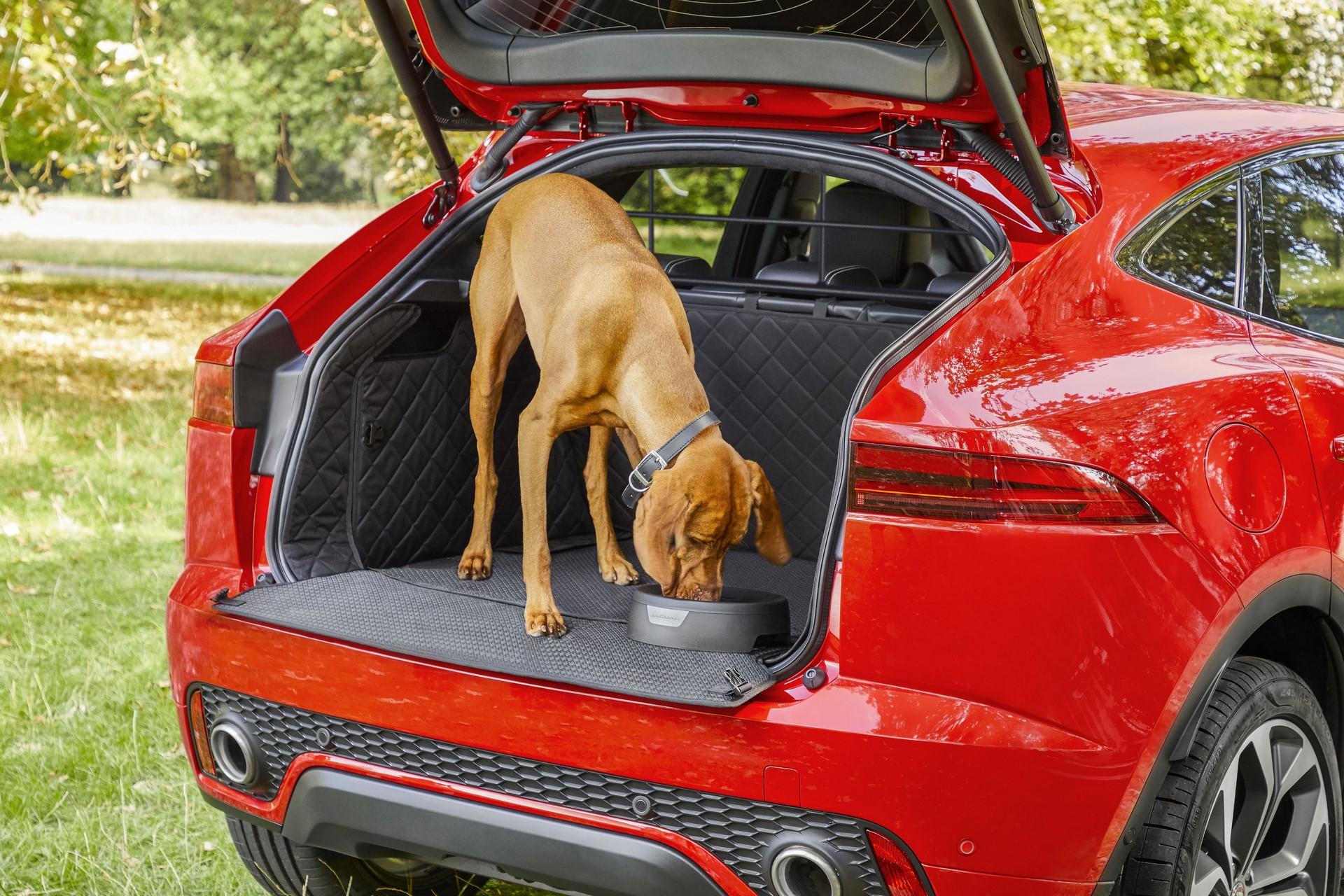 Jaguar Pet products (1)