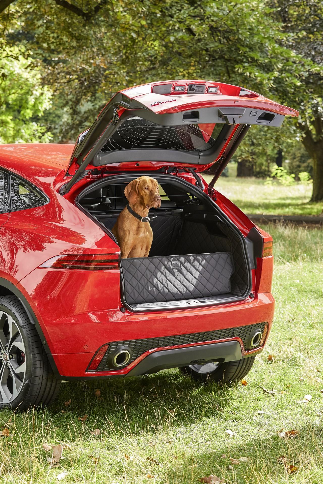 Jaguar Pet products (4)
