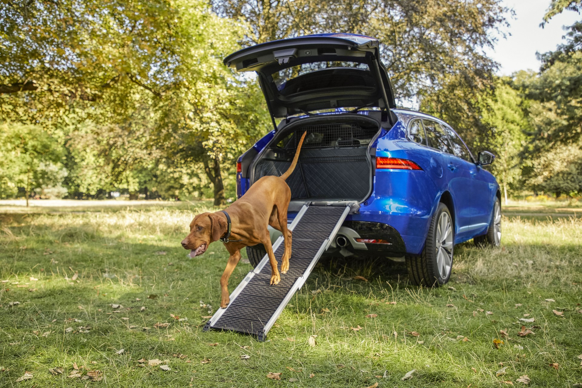 Jaguar Pet products (6)