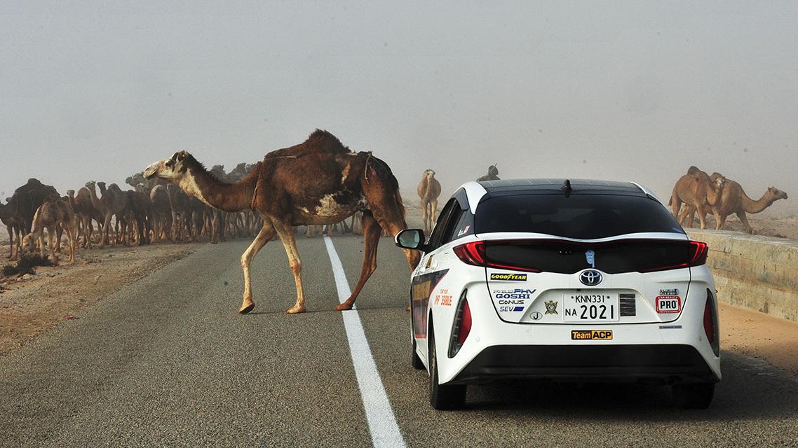 Toyota Prius Paris to Dakar (5)