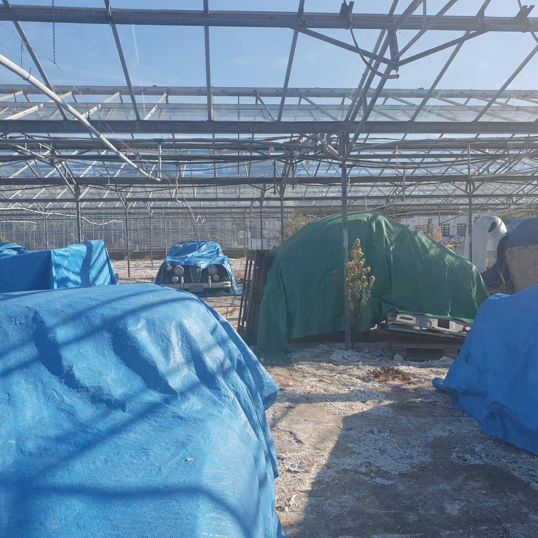 Jaguars-greenhouse-2