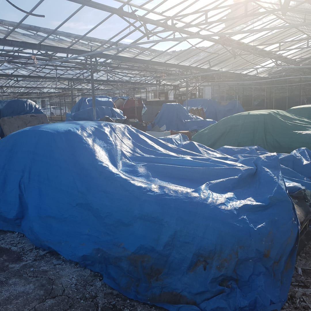 Jaguars-greenhouse-4