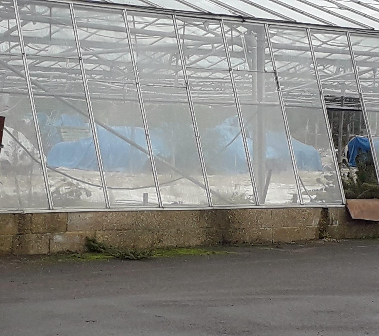Jaguars-greenhouse-9