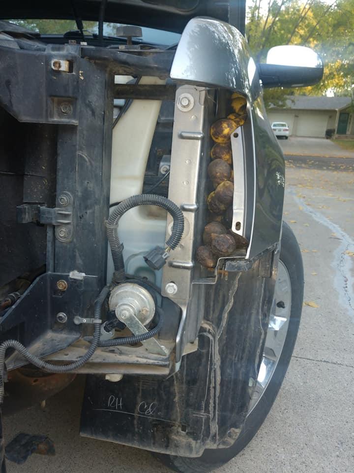 Chevrolet-Avalanche-Squirrel-Walnuts-10