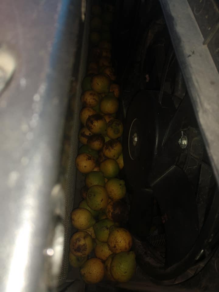 Chevrolet-Avalanche-Squirrel-Walnuts-11