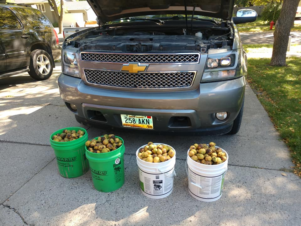 Chevrolet-Avalanche-Squirrel-Walnuts-6