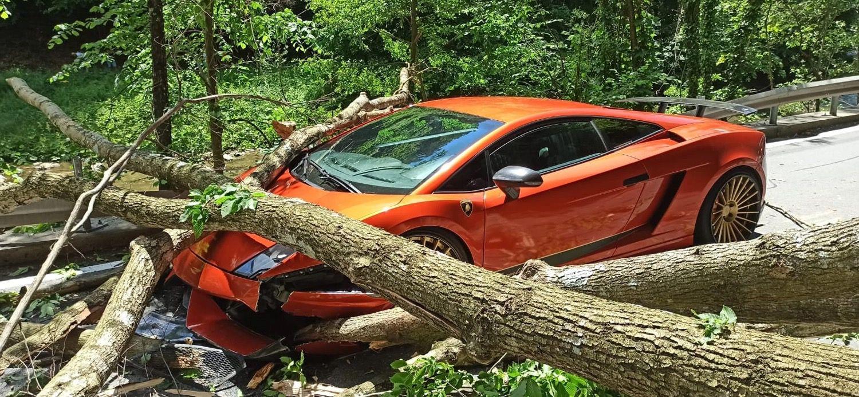 Lamborghini_Gallardo_tree-0001