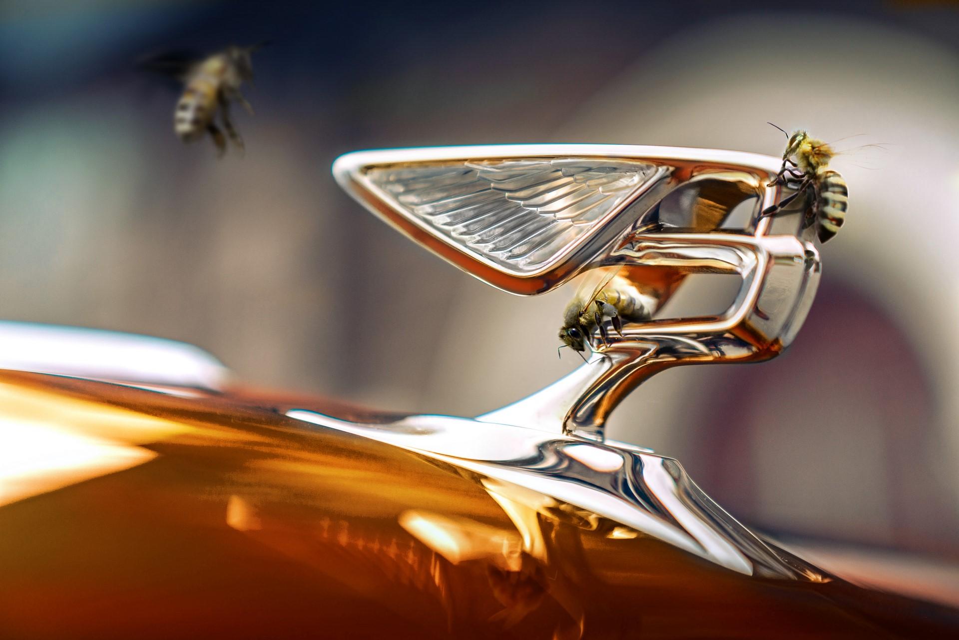 Bentley-Bees-1